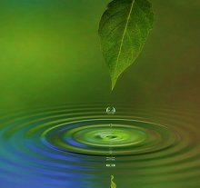About Me. Library Image: Leaf and Water